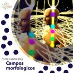Campos morfologicos