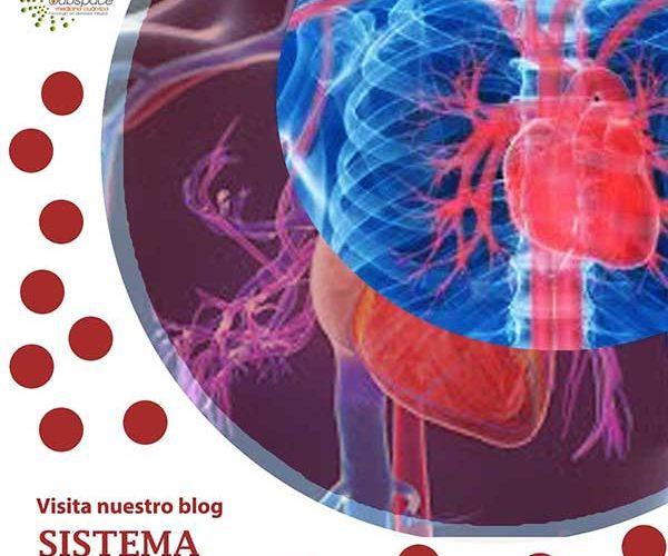 blog de sistema circulatorio, blog, terapeutico biofeedback, Quantum balance, medicina cuántica, SCIO y EDUCTOR QUEX S, QUEX ED, blog terapeutico biofeedback scio, blog te